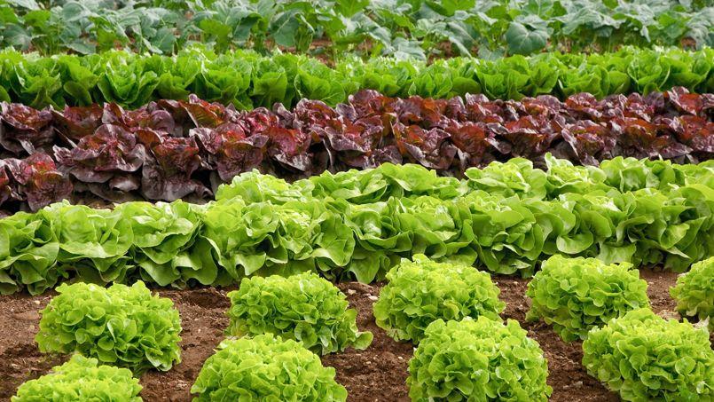 Toshiba se lance dans la culture de salades for Allee de jardin potager