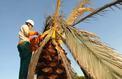 Ces nouvelles maladies qui ravagent les arbres en France