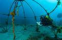 Comment on a sauvé la Méditerranée de la pollution