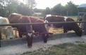 Les éleveurs bovins vont bloquer des hypermarchés Carrefour ce mercredi