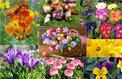Jardin: plantez maintenant les fleurs du printemps