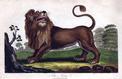 Histoire du lion Personne, de Stéphane Audeguy: le silence des grands fauves