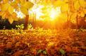 Jardin: les feuilles mortes s'amassent à la pelle