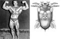 Arnold Schwarzenegger a une (petite) mouche à son nom