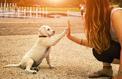 Les Français dépensent en moyenne 211 euros par an pour soigner leur chien