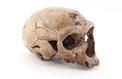 Néandertal était-il trop stupide pour survivre ?