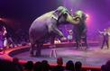 Les défenseurs des animaux auront-ils la peau du cirque?