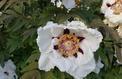 Quelles belles fleurs planter dans un sol calcaire ?