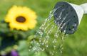 Jardin: l'arrosage dans les règles de l'art