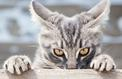 Six raisons étayées scientifiquement de détester les chats (ou de s'en méfier)