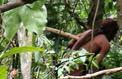 En Amazonie, le dernier Indien de Tanaru