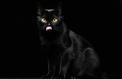 Journée du chat noir: Irez-vous au bout de ce test sur les superstitions ?