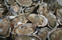 Des particules de microplastiques dans des mollusques, des crustacés et le sel