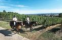 En Alsace, une garde montée veille au grain dans les vignes