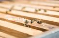 Les abeilles d'Ouessant et le miel de Guerlain