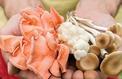 Cultiver ses champignons: l'assurance de paniers bien remplis !