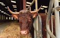 Après 17 ans d'absence, le steak français fait son retour en Chine
