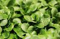 Pesticides : l'utilisation du métam-sodium suspendue jusqu'à fin janvier
