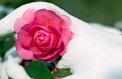 Des idées pour colorer le jardin même en hiver