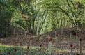 Guerre de 14-18: les Hauts-de-France créent douze «Jardins de la Paix»