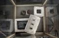Des scarabées momifiés découverts dans un tombeau antique en Égypte