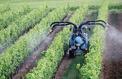 Les pesticides sont-ils réellement dangereux pour la santé ?