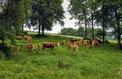 Des agriculteurs réclament une enquête sur les antispécistes