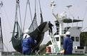 Le Japon revient à la chasse à la baleine