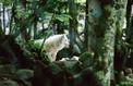 Le loup. Une histoire culturelle, de Michel Pastoureau: quand on parle du loup…