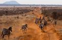 10 raisons de partir au Kenya