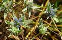 En France, ces fleurs sauvages menacées de disparition