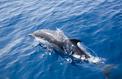 Un dispositif pour protéger les dauphins de la pêche