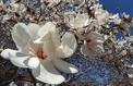 Jardin: de beaux arbustes pour les sols acides