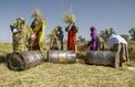 Argungu participe au pari de l'autosuffisance en riz
