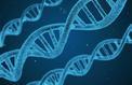 Création d'ADN artificiel qui complexifie le vivant