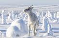 Aïlo, une odyssée en Laponie: «L'homme n'a pas le privilège de l'émotion»