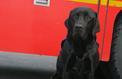 Lol, le premier chien d'assistance judiciaire de France
