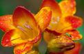 Un jardin parfumé douze mois sur douze