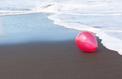 Les ballons de baudruche, tueurs d'oiseaux marins
