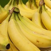 80 kilos de cocaïne découverts dans des cartons de bananes