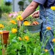 Quelles fleurs cultiver dans un potager?