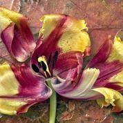 Quand ôter le feuillage des plantes à bulbes défleuries?