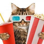 À Londres, adoptez un chat après une séance de cinéma