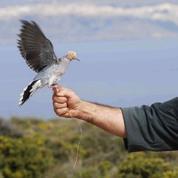 Un référendum historique sur la chasse au printemps à Malte