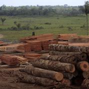 La filière bois s'organise pour lutter contre l'illégalité