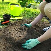 Plantation d'arbres et d'arbustes: finie la Sainte-Catherine !