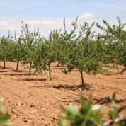 Devant ses actionnaires, Accor s'engage à planter des arbres
