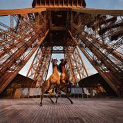 Des chevaux cabrés en haut de la tour Eiffel