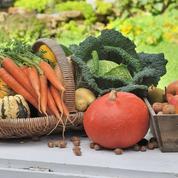 Guide des plantes potagères: le régal au bout de la binette