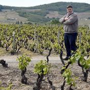 Un vigneron bio qui refuse de traiter ses vignes face à la justice